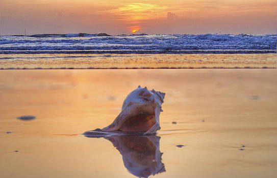 Put Your Keys In The Conch Shell.....  Come On In by DM Photography- Dan Mongosa