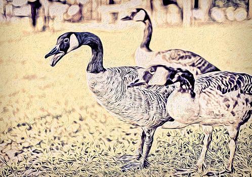 Quackers by Denise Teague