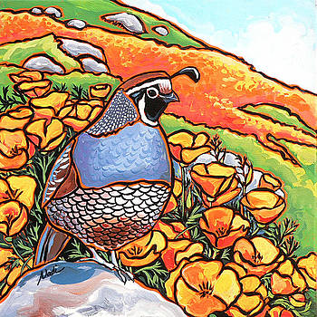 Quail Poppies by Nadi Spencer