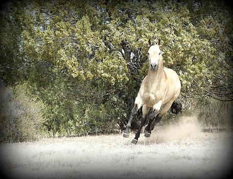 Quarter Horse by Kasie Morgan