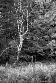 Harold E McCray - Quechee - Vermont