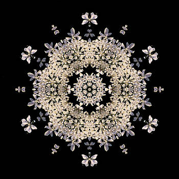 Queen Anne's Lace Flower Mandala by David J Bookbinder