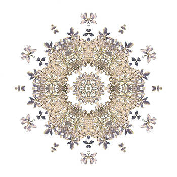 Queen Annes Lace I Flower Mandala White by David J Bookbinder