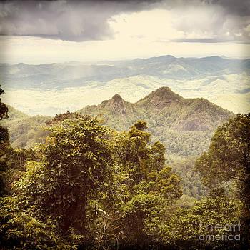 Tim Hester - Queensland Rainforest