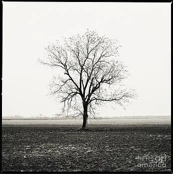 Scott Pellegrin - Quiet Desperation