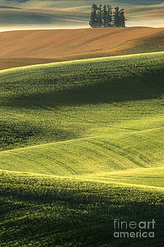 Sandra Bronstein - Quiet Morning In The Palouse