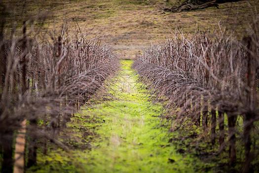 Quiet Vineyard by Mike Lee