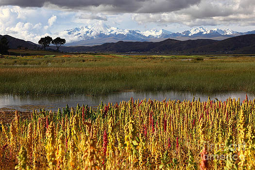 James Brunker - Quinoa The Andean Cereal