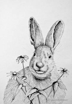 Rabbit by John Stuart Webbstock