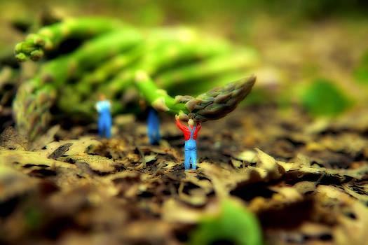 Raccogliere asparagi  un lavoro faticoso by Toni Polinni