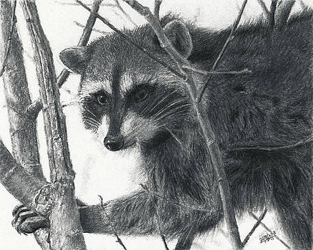 Raccoon - Charcoal Experiment by Joshua Martin