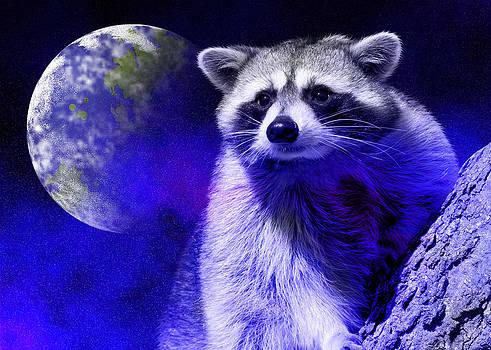 Jeanette K - Raccoon Dream