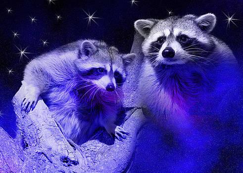 Jeanette K - Raccoon Dream3