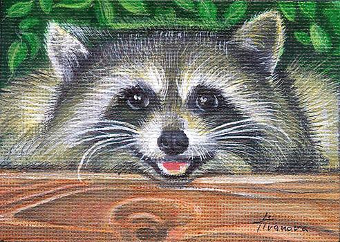 Raccoon happy eyes by Temenuga Ivanova