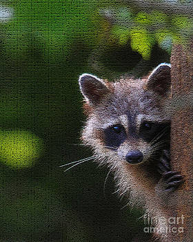 Raccoon by Roger Becker