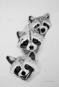 Raccoons by John Stuart Webbstock