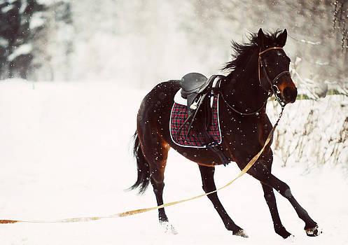 Jenny Rainbow - Race in the Snow 3