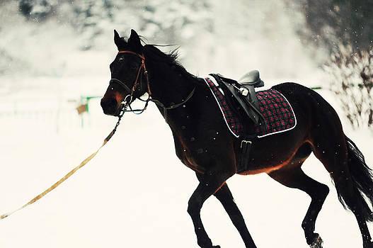 Jenny Rainbow - Race in the Snow 4