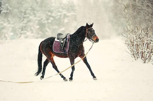 Jenny Rainbow - Race in the Snow 6