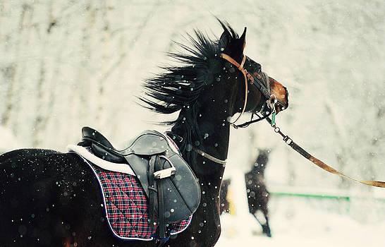 Jenny Rainbow - Race in the Snow 7