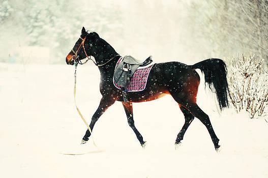 Jenny Rainbow - Race in the Snow 8