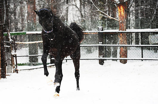 Jenny Rainbow - Race in the Snow 9