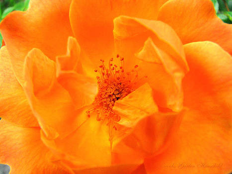Radiant in Orange by Brooks Garten Hauschild