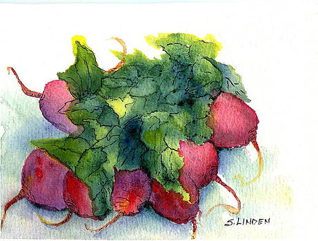 Radishes by Sandy Linden