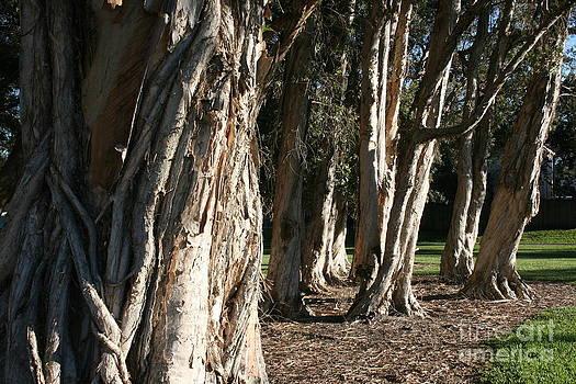 Ragged Trees by Ruthann Carlson