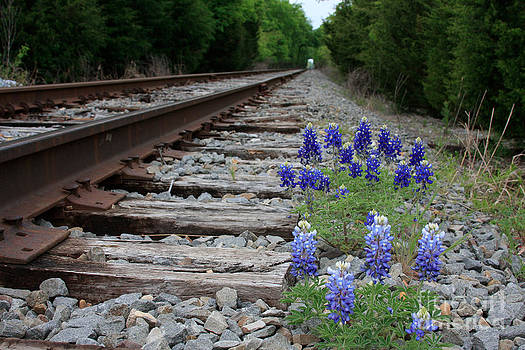 Railroad Bluebonnets by Jerry Bunger