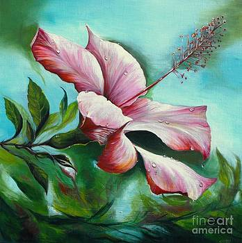 Rain kissed bloom - Pink Hibiscus  by Soma Mandal Datta