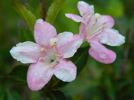 Rain kissed flower by Linda Brown