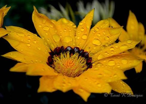 Rain Petals by Terri K Designs