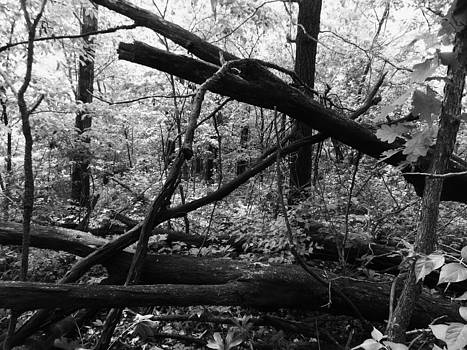 Rain Wood by Mark Kime