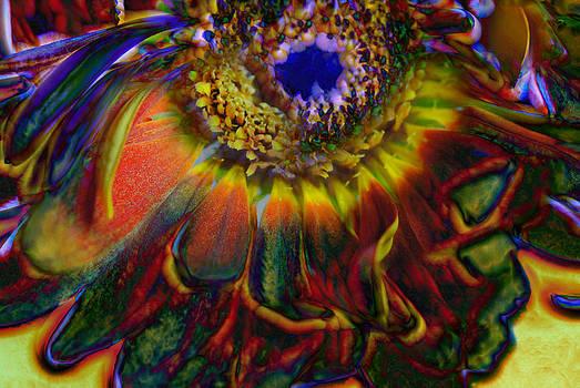 Cindy Boyd - Rainbow Abstract Dying Gerber Daisy