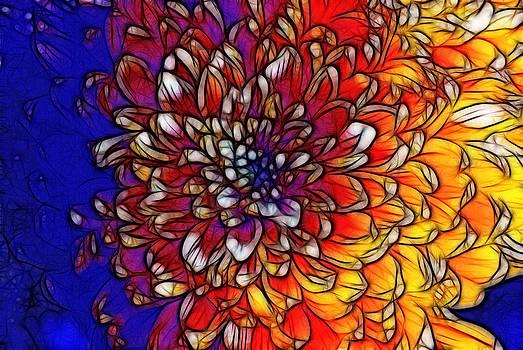 Cindy Boyd - Rainbow Chrysanthemum Line Art