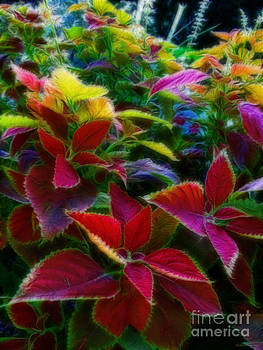 Rainbow Garden by Kathie McCurdy