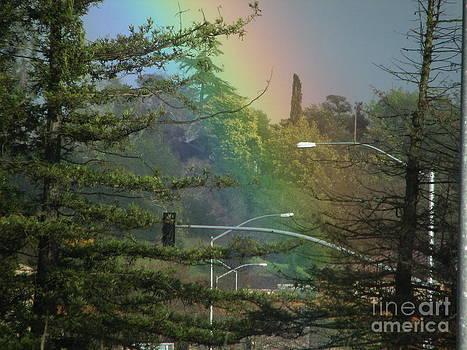 Rainbow in the Redwood Empire by Matt James