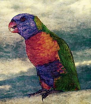 Rainbow Parrot by Digital Art Photo Studio