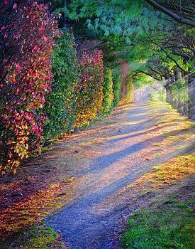 Rainbow Path by William Schmid