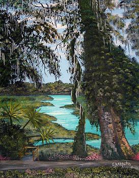 Rainbow Springs by Gloria E Barreto-Rodriguez