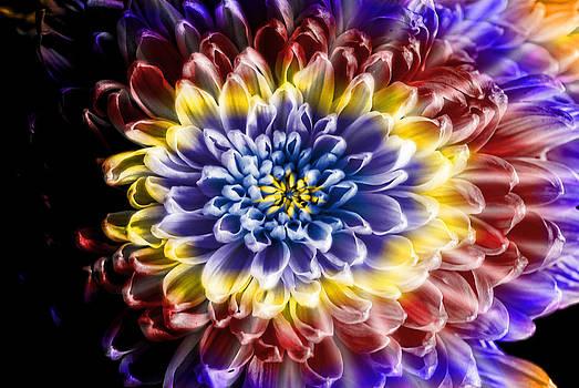 Cindy Boyd - Rainbow Tie Dye Chrysanthemum Flower