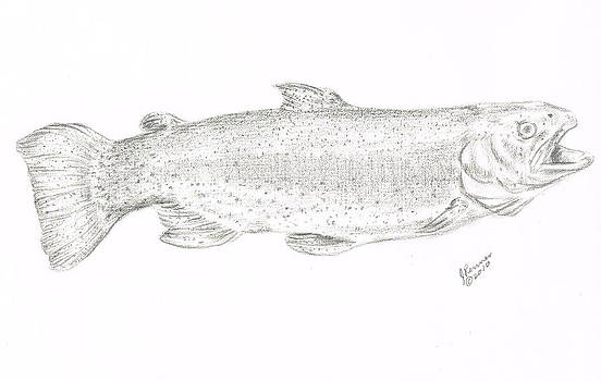Rainbow Trout by Joann Renner