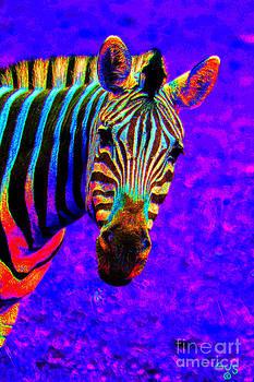 Nick Gustafson - Rainbow Zebra