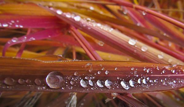 Raindrops On Autumn Grass by Eva Kondzialkiewicz
