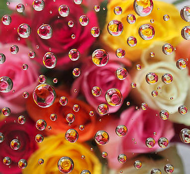 Raindrops on Roses by Adrienne Franklin