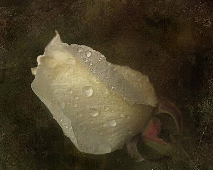 Liz  Alderdice - Raindrops on Roses
