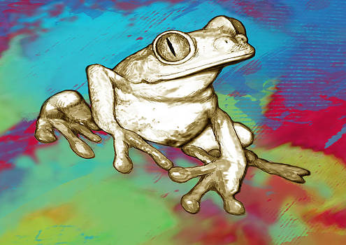 Rainforest Frog Stylised Pop Art Drawing Portrait Poster by Kim Wang