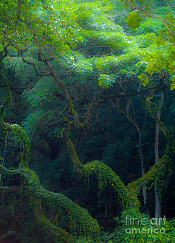 Rainforest in Waimea Valley Too by Lisa Cortez
