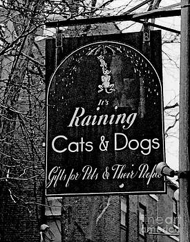 Raining Cats and Dogs  by Juls Adams